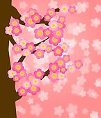 Flowering Cherry Blossom Tree in Spring