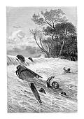 Swimming to Safety, vintage engraving
