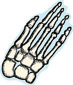 Human Hand Bones