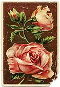 Roses - picture artist Ivano Shved