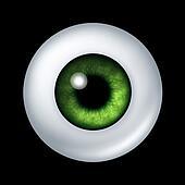 Human green eye ball organ