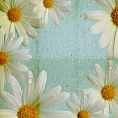 paper blue background with camomile