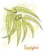 Eucalyptus branch. Watercolor style.