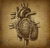Grunge Human heart