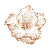 Gladiolus flower.