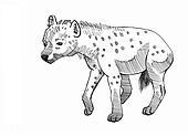 hyena cowering