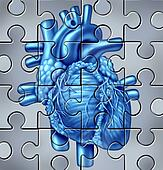 Human Heart Puzzle