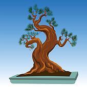 Old Bonsai Tree