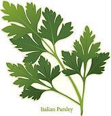 Italian Parsley Herb