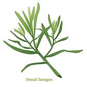 French Tarragon Herb