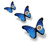 Three Minnesota flag butterflies