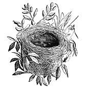 bird nest vintage illustration