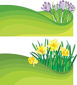 blooming daffodil and crocus - the