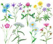 set of meadow flowers