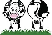Cow front and back
