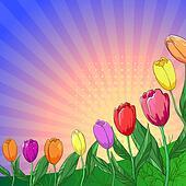 Flower background, tulips
