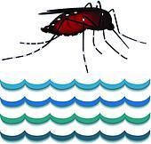 Dengue fever mosquito, water