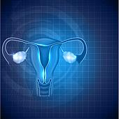Female reproductive system background, uterus and ovaries