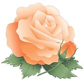 Apricot Rose Flower