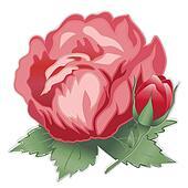 Red Damask Rose Flower