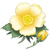 Wild Yellow Rose Flower