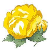 Yellow Damask Rose Flower