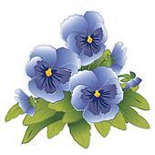 Sky Blue Pansies