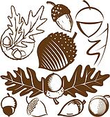 Acorn Collection