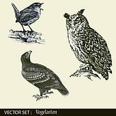 Owl, eagle, thrush