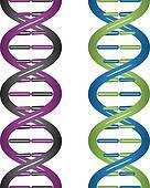 vector seamless DNA