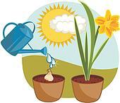 Growing Daffodil