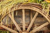 Old wooden wagon loaded with fresh cereal crop