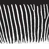 Pattern zebra fur, vector background, EPS10