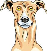 Vector Greyhound Dog breed smile