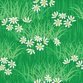 Camomile field seamless background