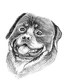 rottweiler dog illustration sketch