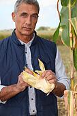 Farmer in a cornfield