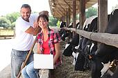 Farming couple stood by cows