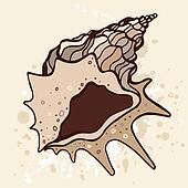 Grange shell. Hand drawn vector illustration