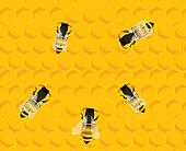 Bees on honey hive background