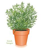 French Tarragon Herb in Flowerpot