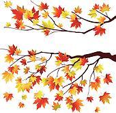 Autumn maple tree branches