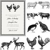 Vector Male and Female Animal Vintage Wedding Invite Set