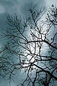 Big Tree Branch Shadows