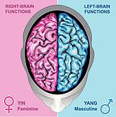 Human brain left and right function