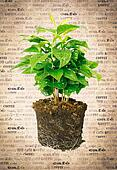 Potted Plant Showing Roots
