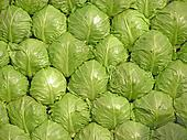 Cabbage put together