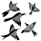 decorative birds drawing on white background, vector illustratio