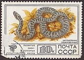 "USSR - CIRCA 1977: A post stamp printed in USSR shows Siberian pit viper, with the inscription in russian ""poison snakes"". circa 1977"