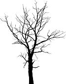 Silhouette of dead tree without leaves